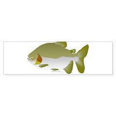 Pacu fish Sticker (Bumper)