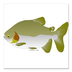 Pacu fish Square Car Magnet 3