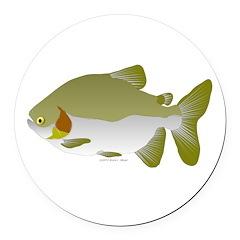 Pacu fish Round Car Magnet