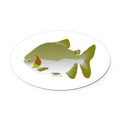 Pacu fish Oval Car Magnet