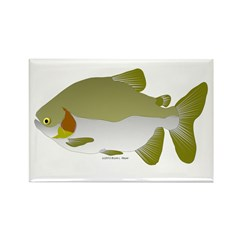Pacu fish Rectangle Magnet (10 pack)