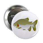 Pacu fish 2.25