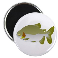 Pacu fish Magnet