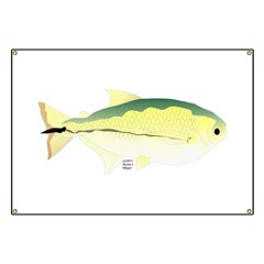 Pacu fish Banner