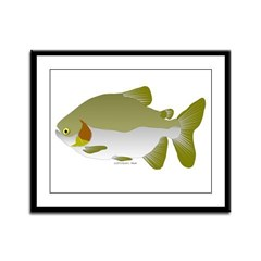 Pacu fish Framed Panel Print