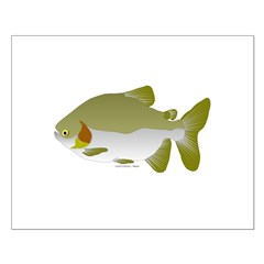Pacu fish Posters