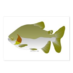 Pacu fish Postcards (Package of 8)
