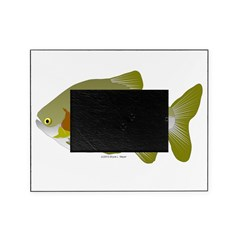 Pacu fish Picture Frame