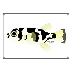 prochilodus (from Audreys Amazon River) Banner