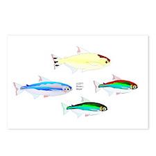 Four Tetras (Amazon River tropical fish) Postcards