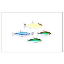 Four Tetras (Amazon River tropical fish) Large Pos