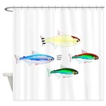 Four Tetras (Amazon River tropical fish) Shower Cu