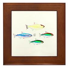 Four Tetras (Amazon River tropical fish) Framed Ti