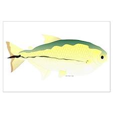 Elongate Hatchetfish Amazon River fish Large Poste