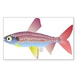 Watermelon fish (Amazon River) Sticker (Rectangle