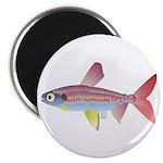 Watermelon fish (Amazon River) Magnet