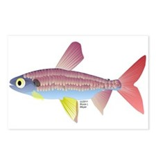Watermelon fish (Amazon River) Postcards (Package