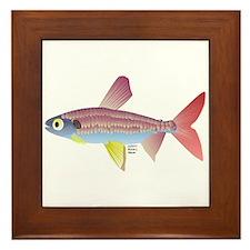 Watermelon fish (Amazon River) Framed Tile
