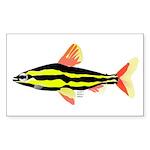 Striped Headstander fish Amazon tropical Sticker (