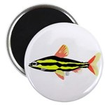 Striped Headstander fish Amazon tropical Magnet