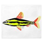 Striped Headstander fish Amazon tropical King Duve