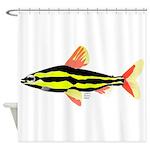 Striped Headstander fish Amazon tropical Shower Cu