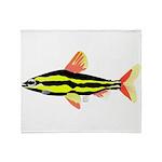 Striped Headstander fish Amazon tropical Stadium