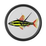 Striped Headstander fish Amazon tropical Large Wal
