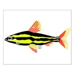 Striped Headstander fish Amazon tropical Small Pos
