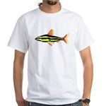 Striped Headstander fish Amazon tropical White T-S