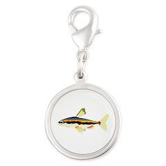 Golden Pencilfish tropical fish Amazon Silver Roun