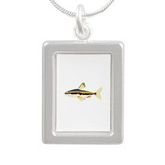 Golden Pencilfish tropical fish Amazon Silver Port