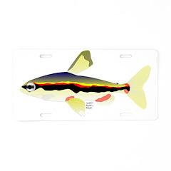 Golden Pencilfish tropical fish Amazon Aluminum Li