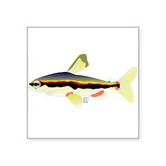 Golden Pencilfish tropical fish Amazon Square Stic