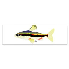 Golden Pencilfish tropical fish Amazon Bumper Sticker
