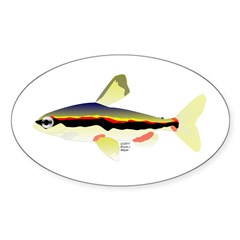 Golden Pencilfish tropical fish Amazon Decal