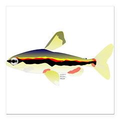 Golden Pencilfish tropical fish Amazon Square Car