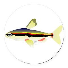 Golden Pencilfish tropical fish Amazon Round Car M
