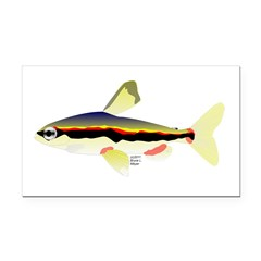 Golden Pencilfish tropical fish Amazon Rectangle C