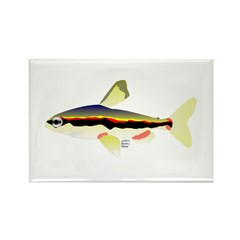 Golden Pencilfish tropical fish Amazon Rectangle M