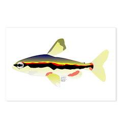 Golden Pencilfish tropical fish Amazon Postcards (