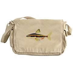 Golden Pencilfish tropical fish Amazon Messenger B