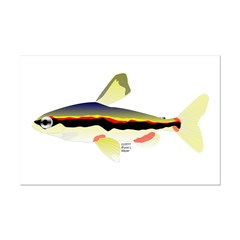 Golden Pencilfish tropical fish Amazon Posters
