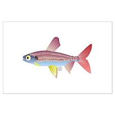 Golden Pencilfish tropical fish Amazon Large Poste
