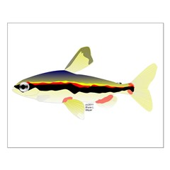 Golden Pencilfish tropical fish Amazon Posters