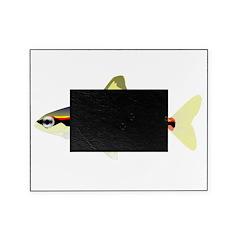 Golden Pencilfish tropical fish Amazon Picture Frame