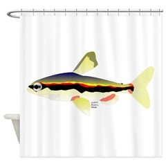 Golden Pencilfish tropical fish Amazon Shower Curt