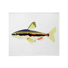 Golden Pencilfish tropical fish Amazon Stadium Bl