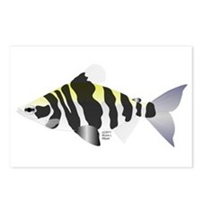 Highbacked Headstander tropical fish Postcards (Pa