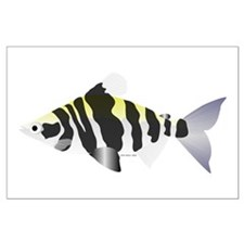 Highbacked Headstander tropical fish Large Poster